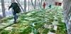 صورة جوية لنهر ساكرامنتو بواسطة الفنان Seyed Alavi معروضة فى المطار الدولى ساكرامنتو